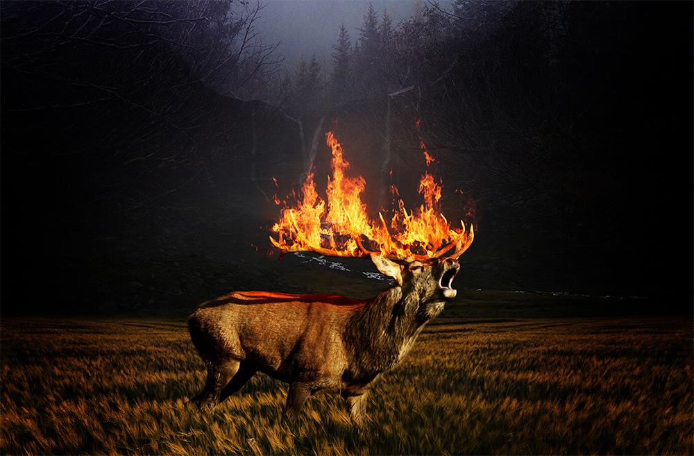 Fire-1.jpg